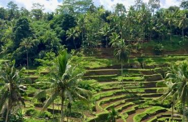 pola ryżowe Indonezja wyjazdy na motocykle