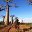 Madagaskar. Lemury, słońce, zebu i baobaby